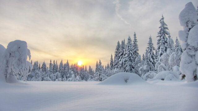 Vasatinget 2019 – årets vinterting!