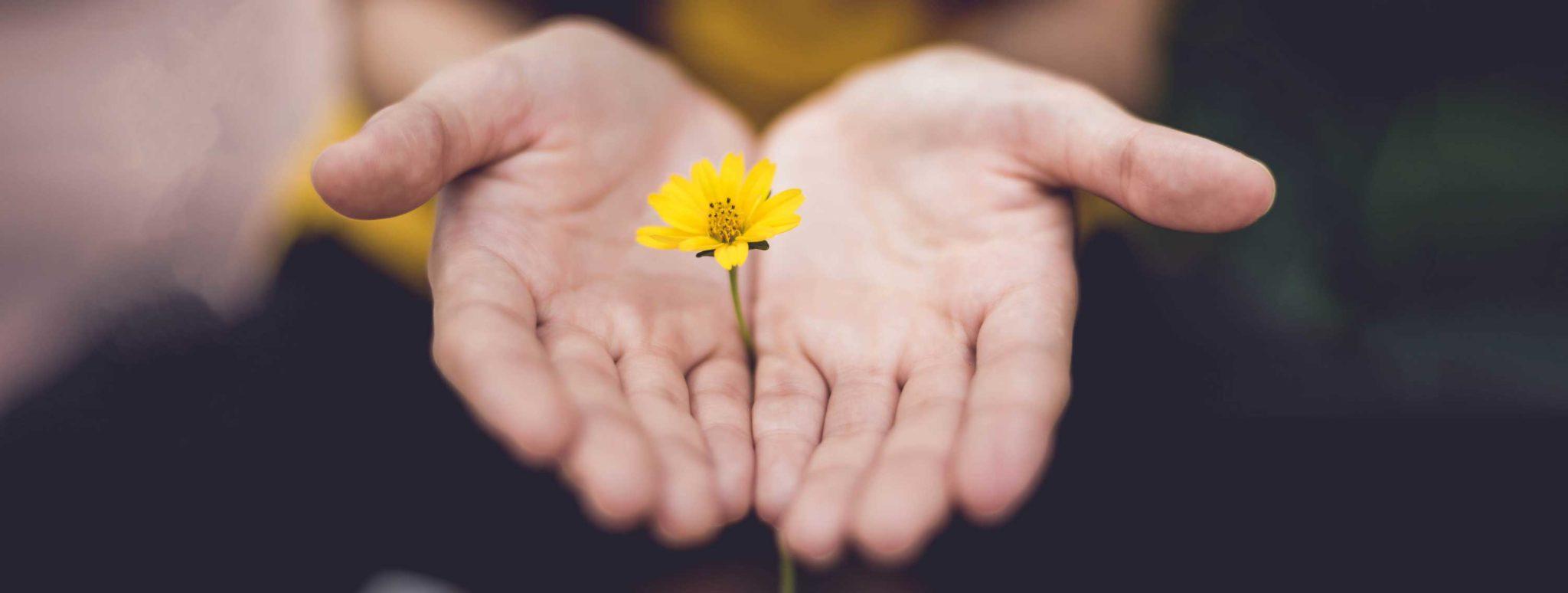Händer som håller en blomma